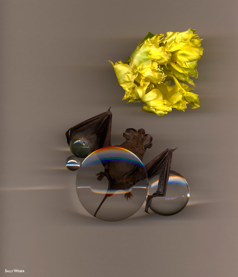 2014-FOTOSEPTIEMBREUSA_Calendar_Sally-Weber_Momentary-Realities-Exhibit_Cinnabar