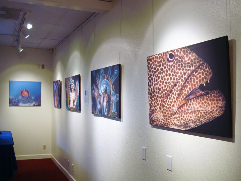 2014-FOTOSEPTIEMBRE-USA_Musical-Bridges-Art-Gallery_004