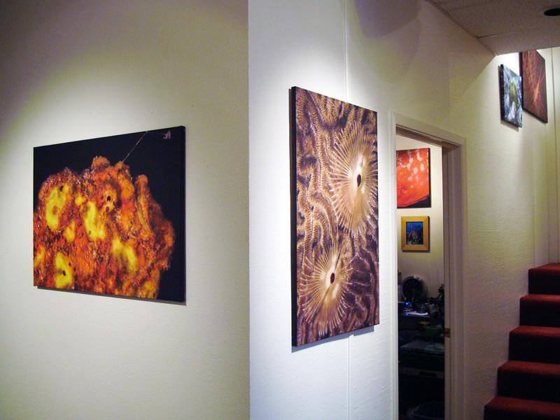 2014-FOTOSEPTIEMBRE-USA_Musical-Bridges-Art-Gallery_006