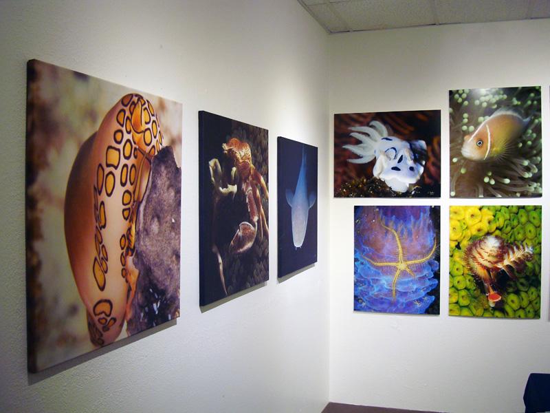2014-FOTOSEPTIEMBRE-USA_Musical-Bridges-Art-Gallery_007