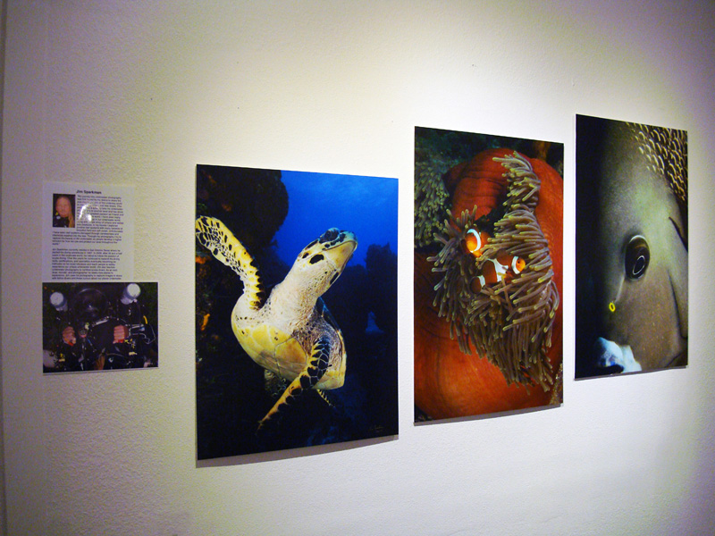 2014-FOTOSEPTIEMBRE-USA_Musical-Bridges-Art-Gallery_010