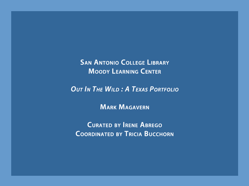 2014-FOTOSEPTIEMBRE-USA_San-Antonio-College-Library_000