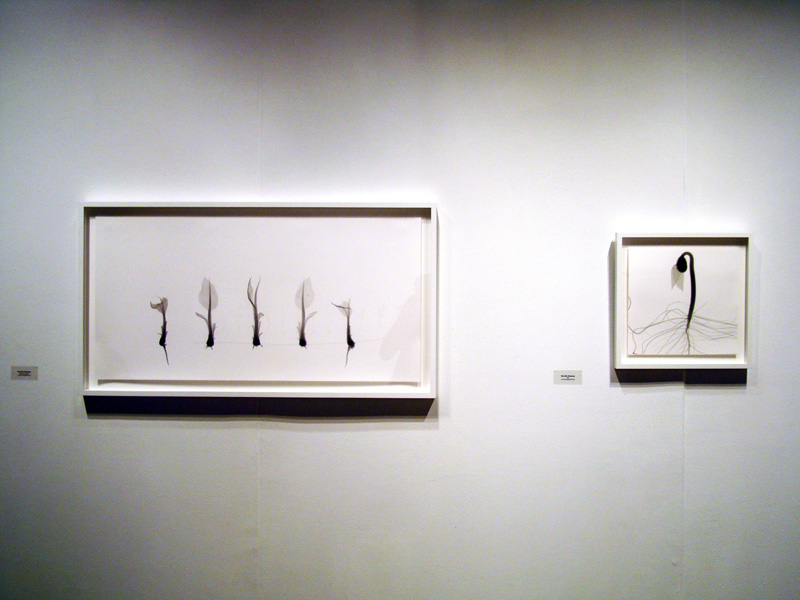 2014-FOTOSEPTIEMBRE-USA_UTSA-Art-Gallery_017