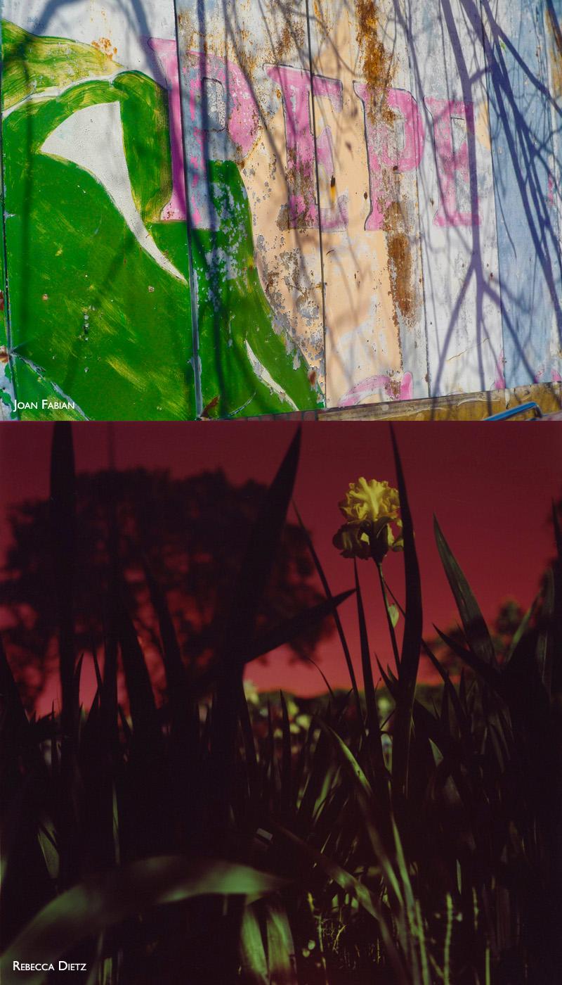 2016-FOTOSEPTIEMBRE-USA_Calendar_Natural-Visions-Exhibition_SAC-EcoCentro
