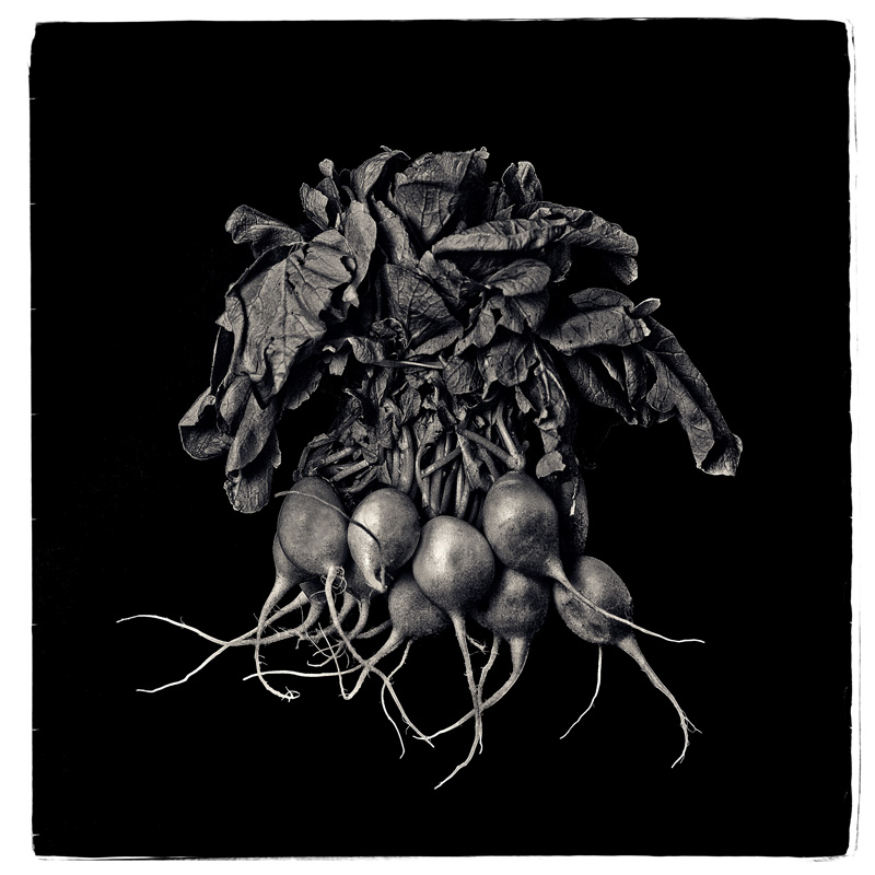 2016-FOTOSEPTIEMBRE-USA_Calendar_Scott-Mueller_Nick-Bottom-Dark-Gloomy-Root-Vegetables-Exhibition_Gallery-20:20